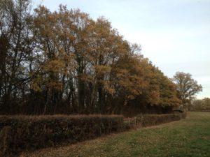 allee-arbres-bourgogne-automne-trottecocotte