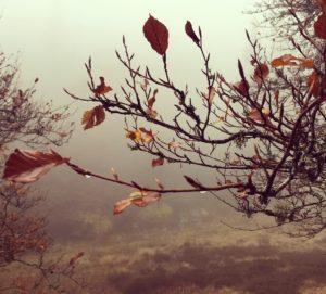 automnedeconstance-trottecocotte